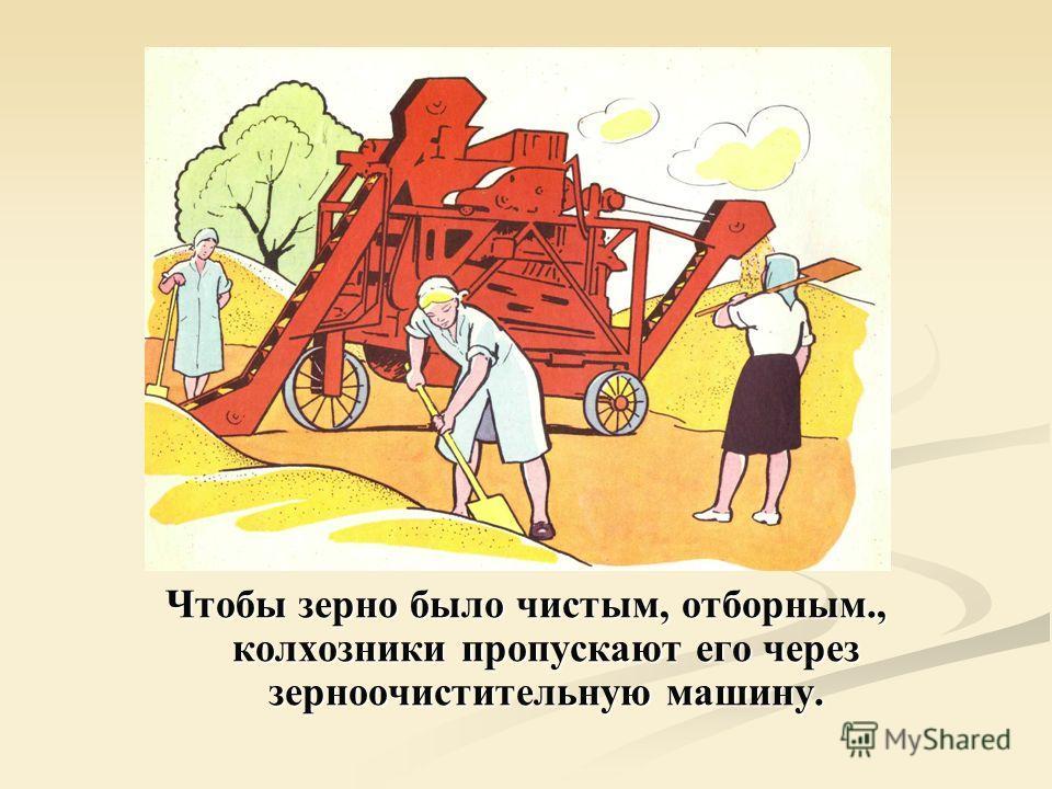 Чтобы зерно было чистым, отборным., колхозники пропускают его через зерноочистительную машину.