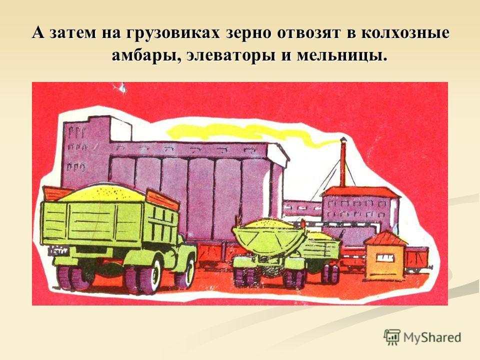 А затем на грузовиках зерно отвозят в колхозные амбары, элеваторы и мельницы.
