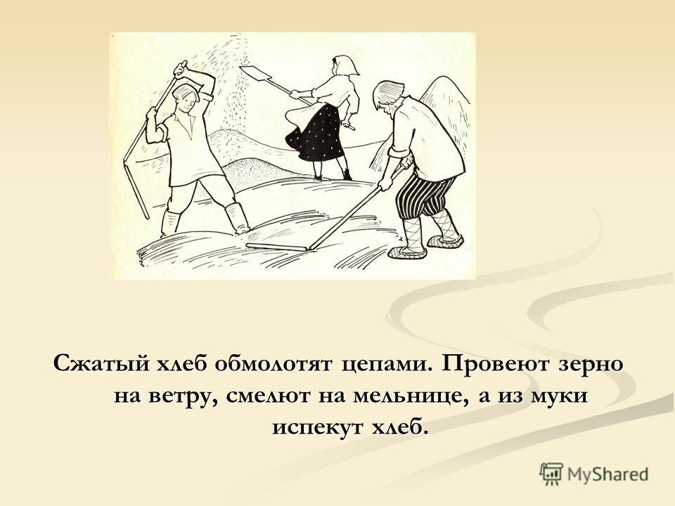 Сжатый хлеб обмолотят цепами. Провеют зерно на ветру, смелют на мельнице, а из муки испекут хлеб.