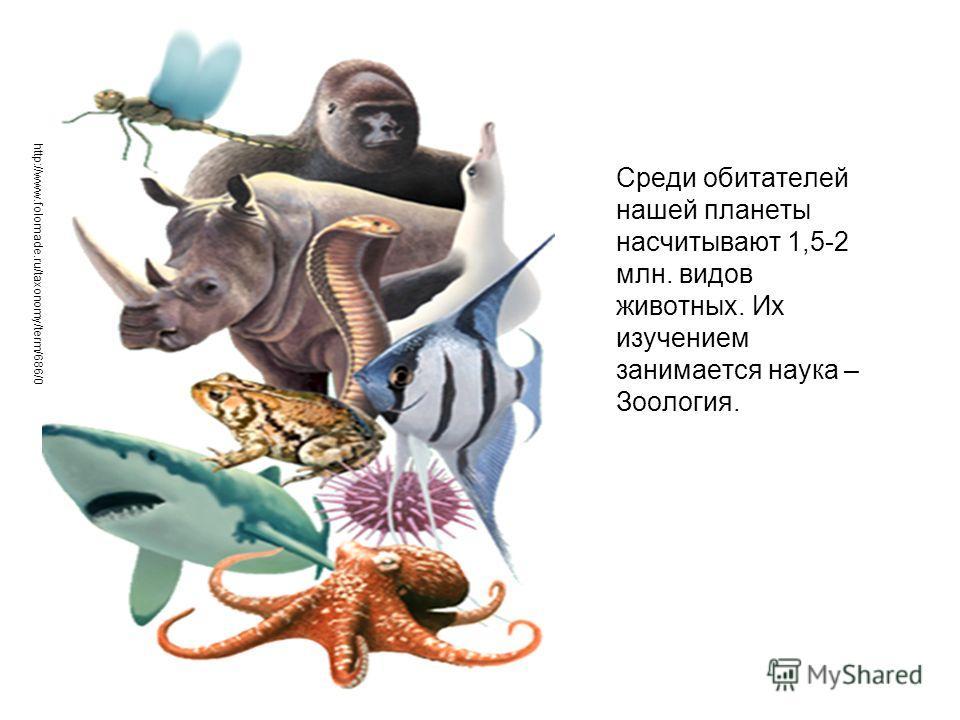Среди обитателей нашей планеты насчитывают 1,5-2 млн. видов животных. Их изучением занимается наука – Зоология. http://www.folomade.ru/taxonomy/term/686/0