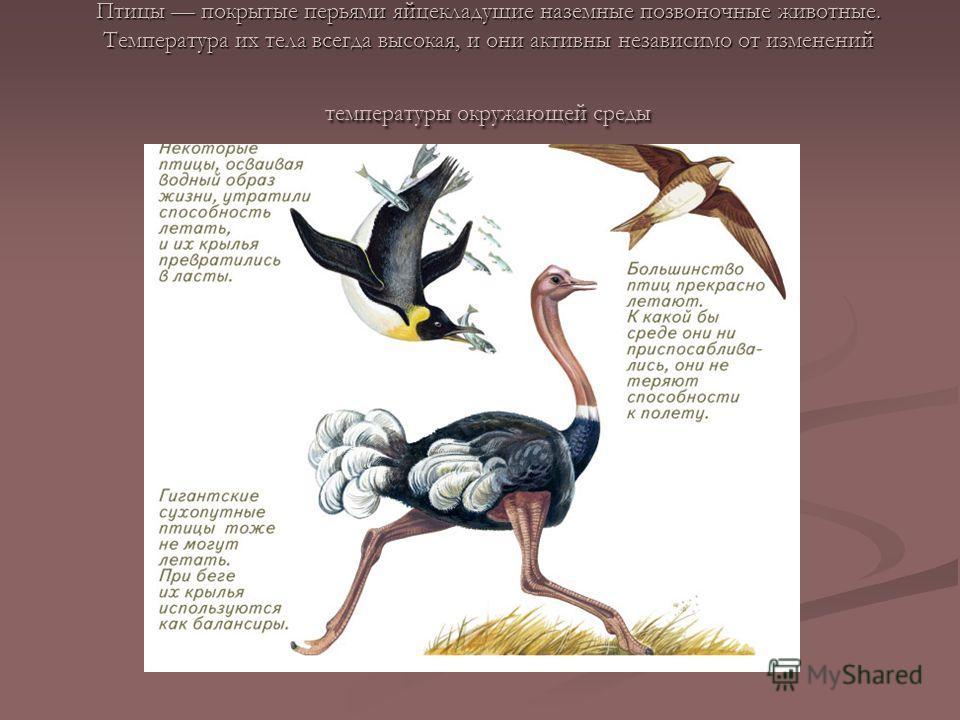 Птицы покрытые перьями яйцекладущие наземные позвоночные животные. Температура их тела всегда высокая, и они активны независимо от изменений температуры окружающей среды