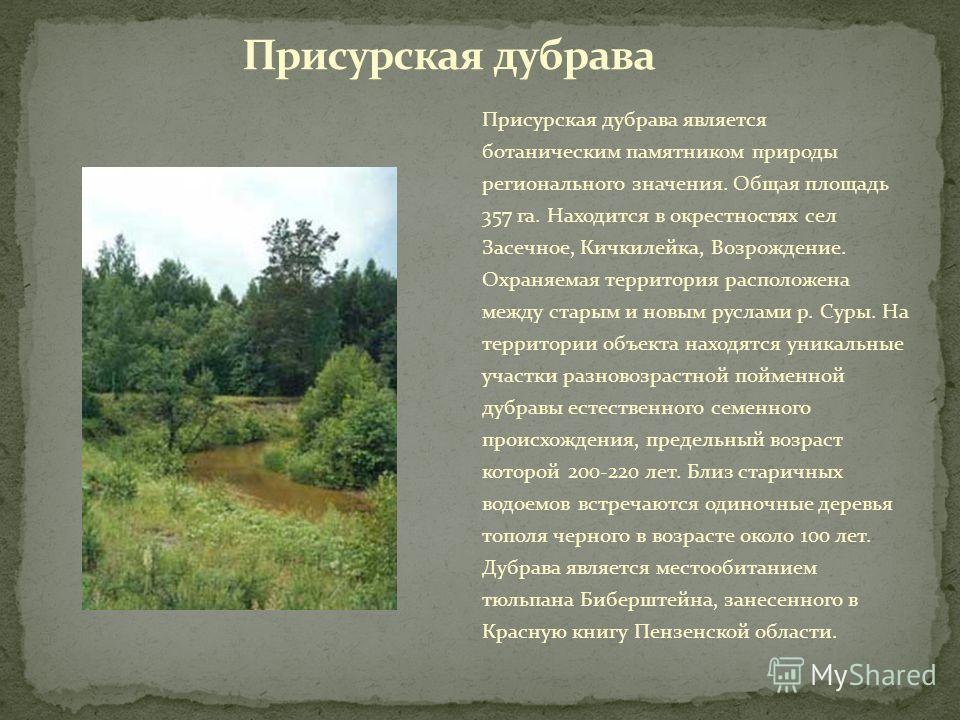 Присурская дубрава является ботаническим памятником природы регионального значения. Общая площадь 357 га. Находится в окрестностях сел Засечное, Кичкилейка, Возрождение. Охраняемая территория расположена между старым и новым руслами р. Суры. На терри
