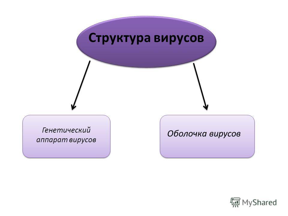 Структура вирусов Генетический аппарат вирусов Оболочка вирусов