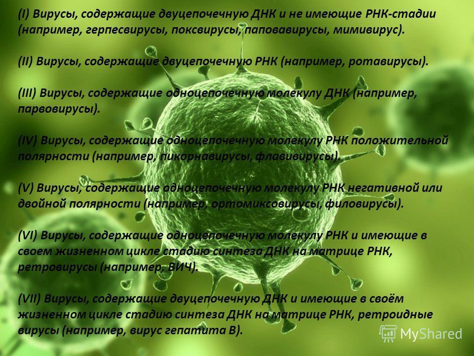 (I) Вирусы, содержащие двуцепочечную ДНК и не имеющие РНК-стадии (например, герпесвирусы, поксвирусы, паповавирусы, мимивирус). (II) Вирусы, содержащие двуцепочечную РНК (например, ротавирусы). (III) Вирусы, содержащие одноцепочечную молекулу ДНК (на