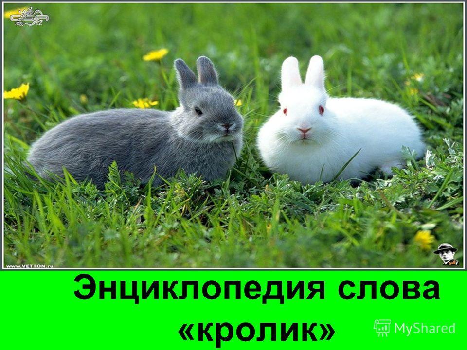 Энциклопедия слова «кролик»