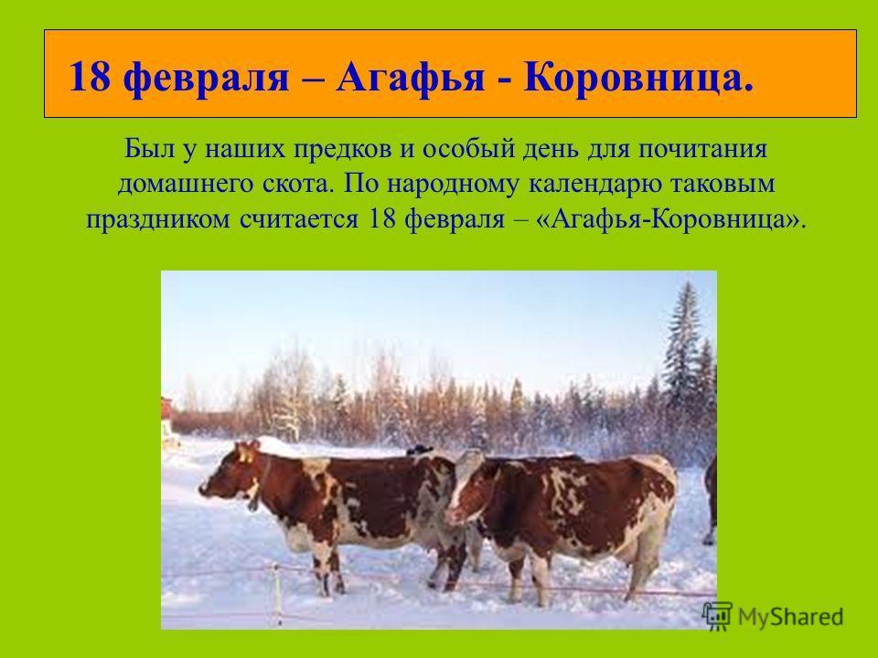 18 февраля – Агафья - Коровница. Был у наших предков и особый день для почитания домашнего скота. По народному календарю таковым праздником считается 18 февраля – «Агафья-Коровница».