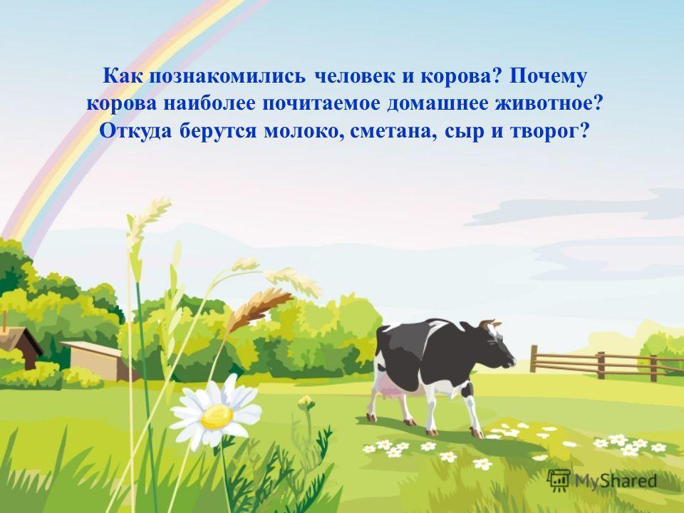 Как познакомились человек и корова? Почему корова наиболее почитаемое домашнее животное? Откуда берутся молоко, сметана, сыр и творог?