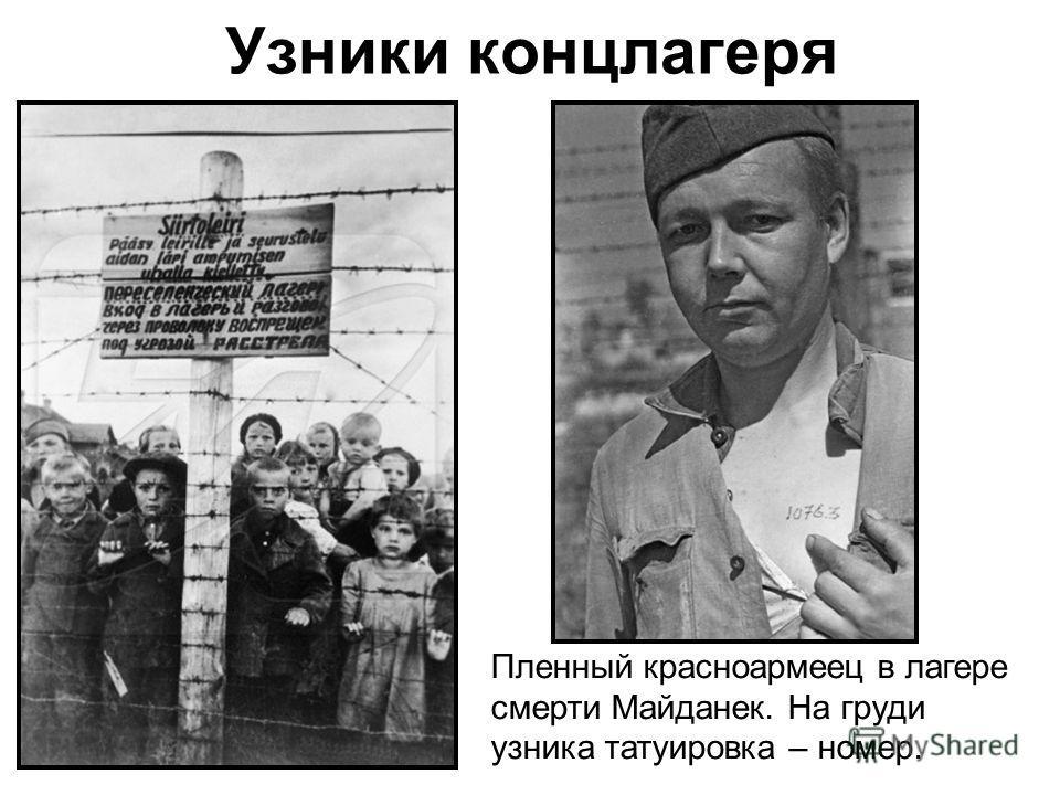 Пленный красноармеец в лагере смерти Майданек. На груди узника татуировка – номер.