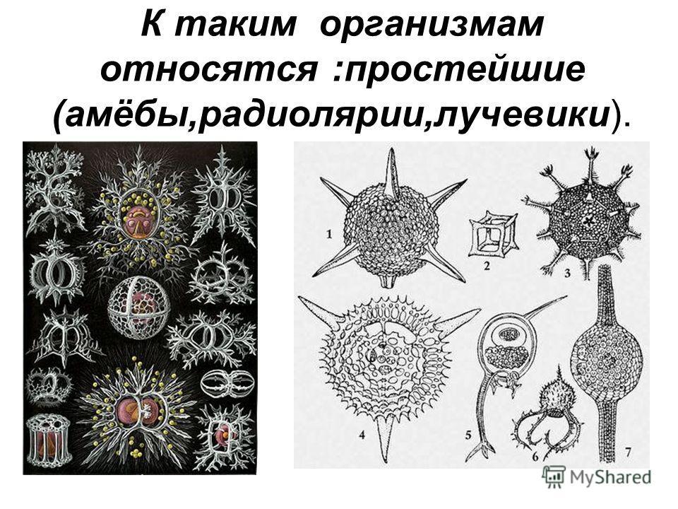 К таким организмам относятся :простейшие (амёбы,радиолярии,лучевики).