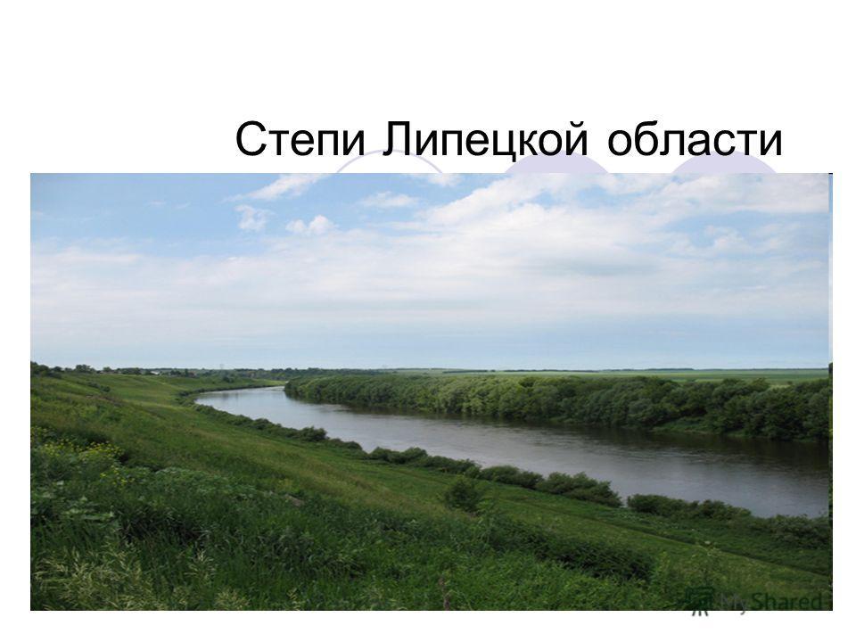 Степи Липецкой области