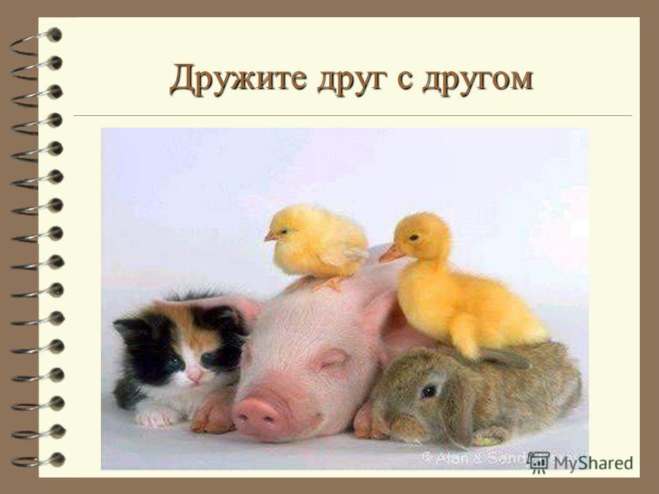 Дружите друг с другом