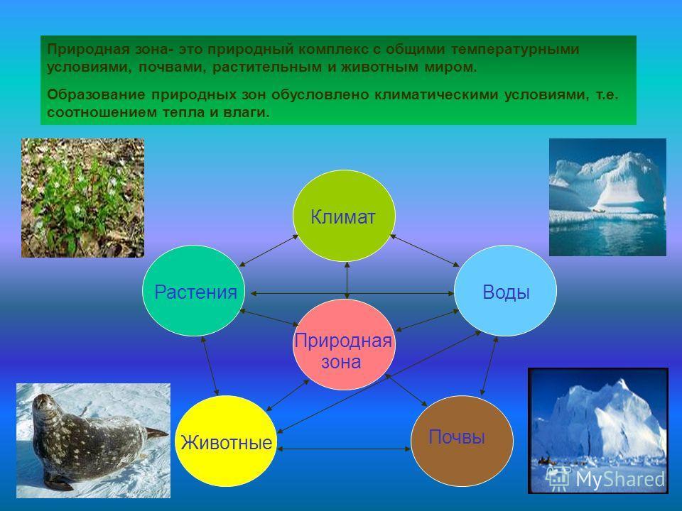 Природная зона- это природный комплекс с общими температурными условиями, почвами, растительным и животным миром. Образование природных зон обусловлено климатическими условиями, т.е. соотношением тепла и влаги. Климат РастенияВоды Почвы Природная зон