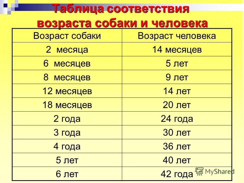 Таблица соответствия возраста собаки и человека Возраст собакиВозраст человека 2 месяца14 месяцев 6 месяцев5 лет 8 месяцев9 лет 12 месяцев14 лет 18 месяцев20 лет 2 года24 года 3 года30 лет 4 года36 лет 5 лет40 лет 6 лет42 года