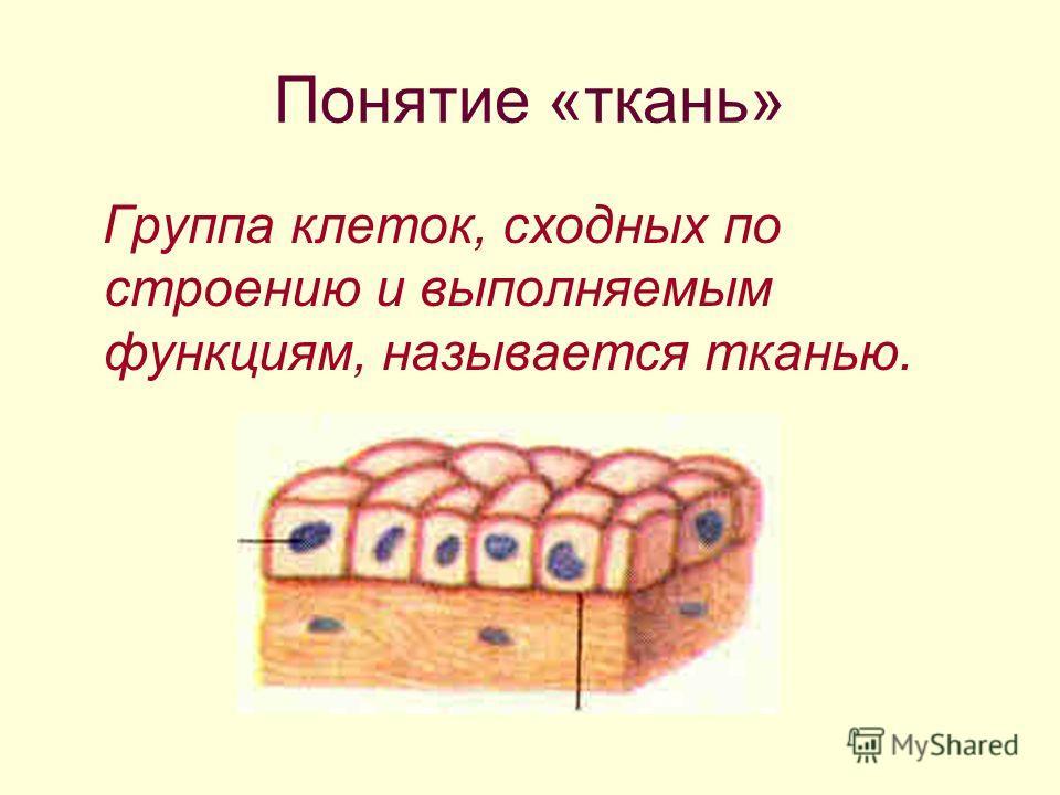 Понятие «ткань» Группа клеток, сходных по строению и выполняемым функциям, называется тканью.