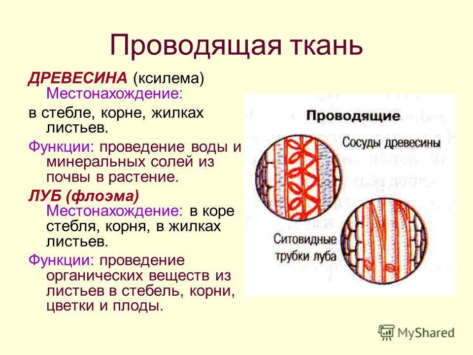 роль и функции минеральных солей: