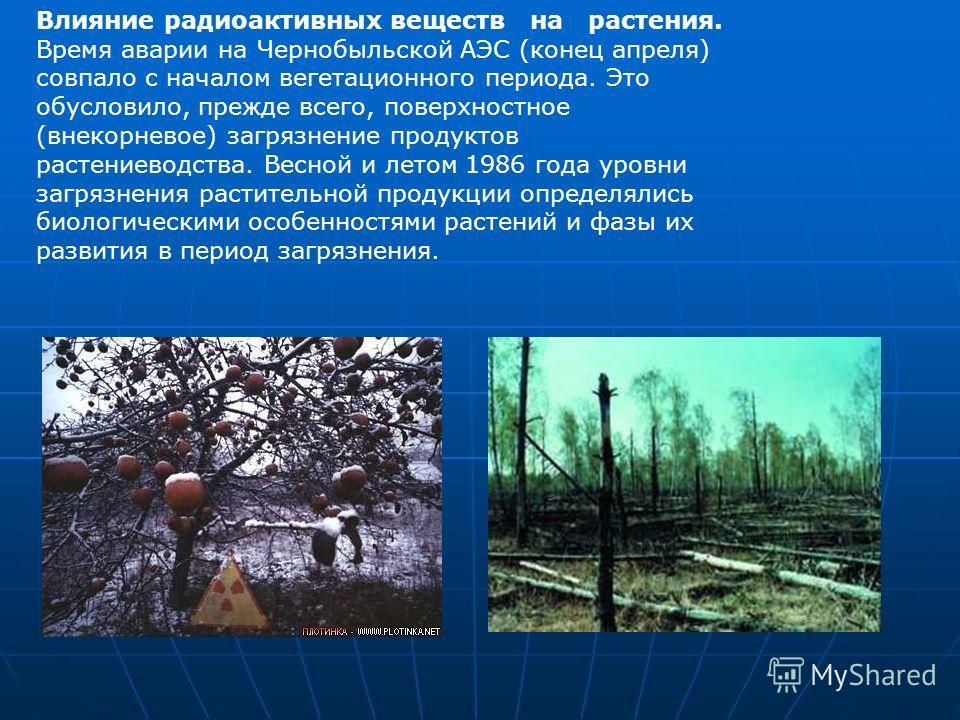 Влияние радиоактивных веществ на растения. Время аварии на Чернобыльской АЭС (конец апреля) совпало с началом вегетационного периода. Это обусловило, прежде всего, поверхностное (внекорневое) загрязнение продуктов растениеводства. Весной и летом 1986