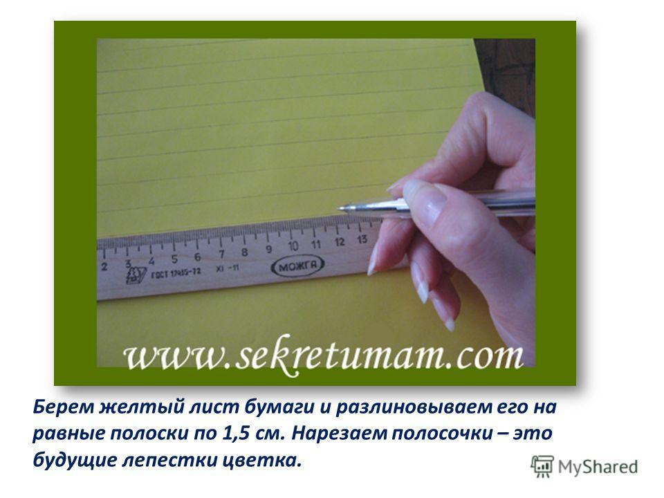 Берем желтый лист бумаги и разлиновываем его на равные полоски по 1,5 см. Нарезаем полосочки – это будущие лепестки цветка.