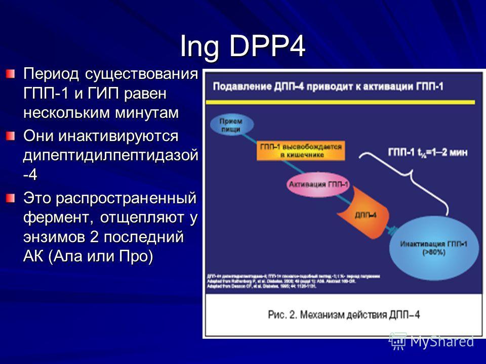 Ing DPP4 Период существования ГПП-1 и ГИП равен нескольким минутам Они инактивируются дипептидилпептидазой -4 Это распространенный фермент, отщепляют у энзимов 2 последний АК (Ала или Про)