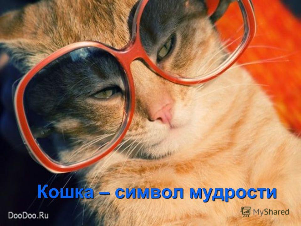 Кошка – символ мудрости
