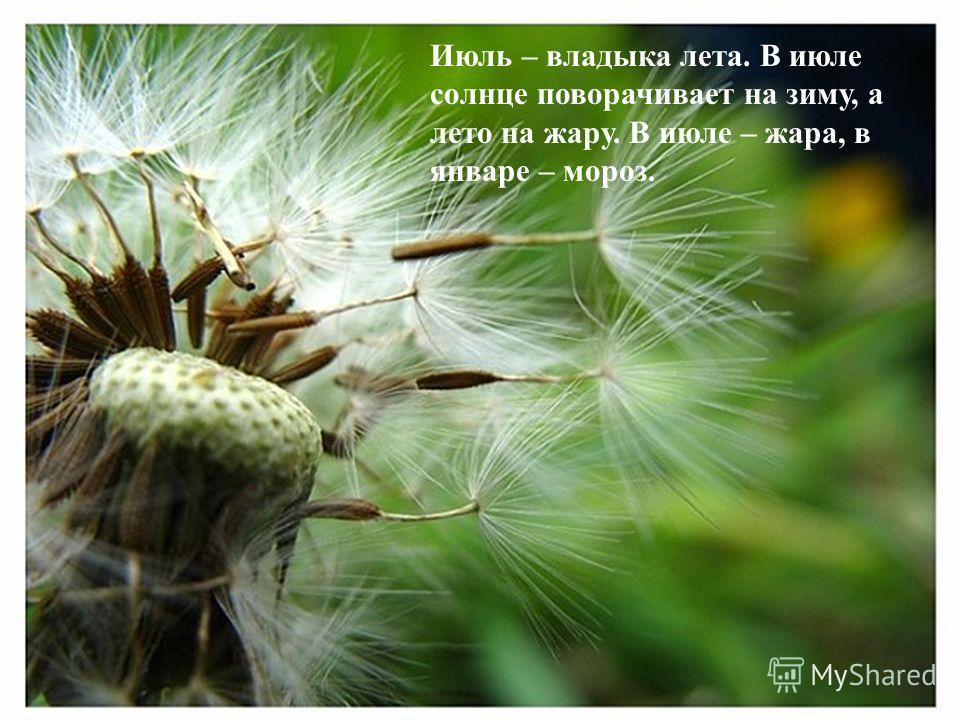 Июль – владыка лета. В июле солнце поворачивает на зиму, а лето на жару. В июле – жара, в январе – мороз.