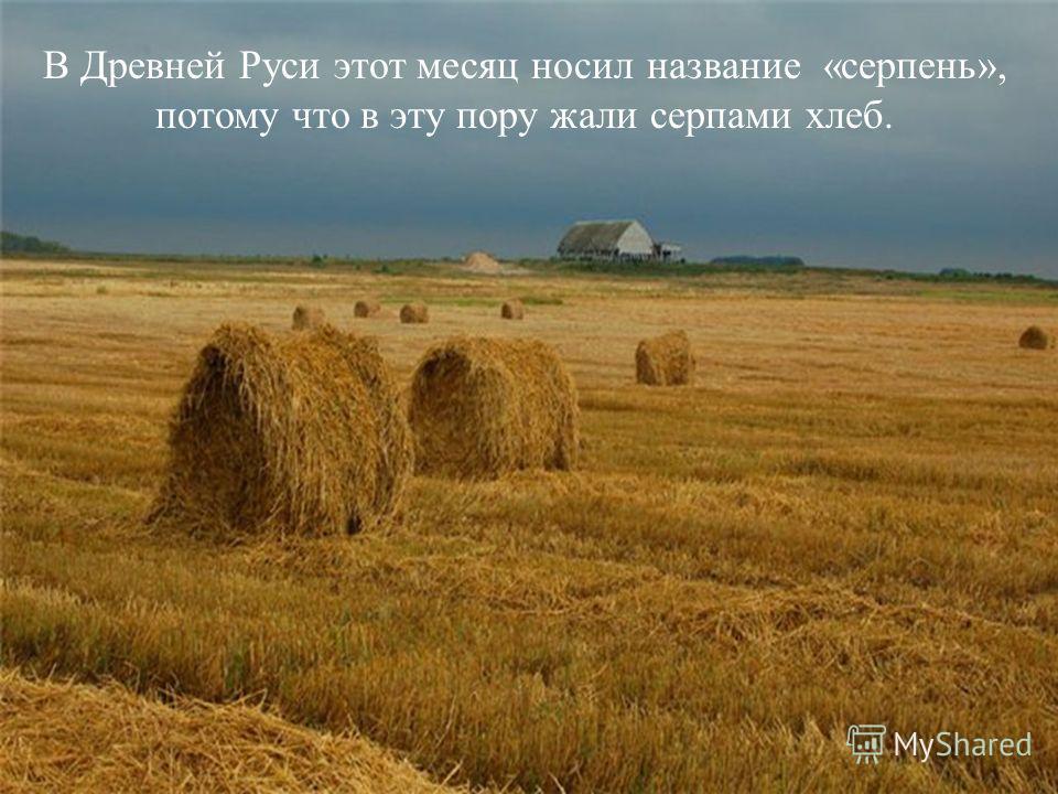 В Древней Руси этот месяц носил название «серпень», потому что в эту пору жали серпами хлеб.