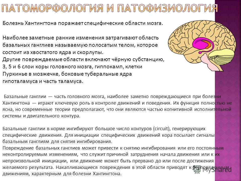 Базальные ганглии часть головного мозга, наиболее заметно повреждающиеся при болезни Хантингтона играют ключевую роль в контроле движений и поведения. Их функция полностью не ясна, но современные теории предполагают, что они являются частью когнитивн