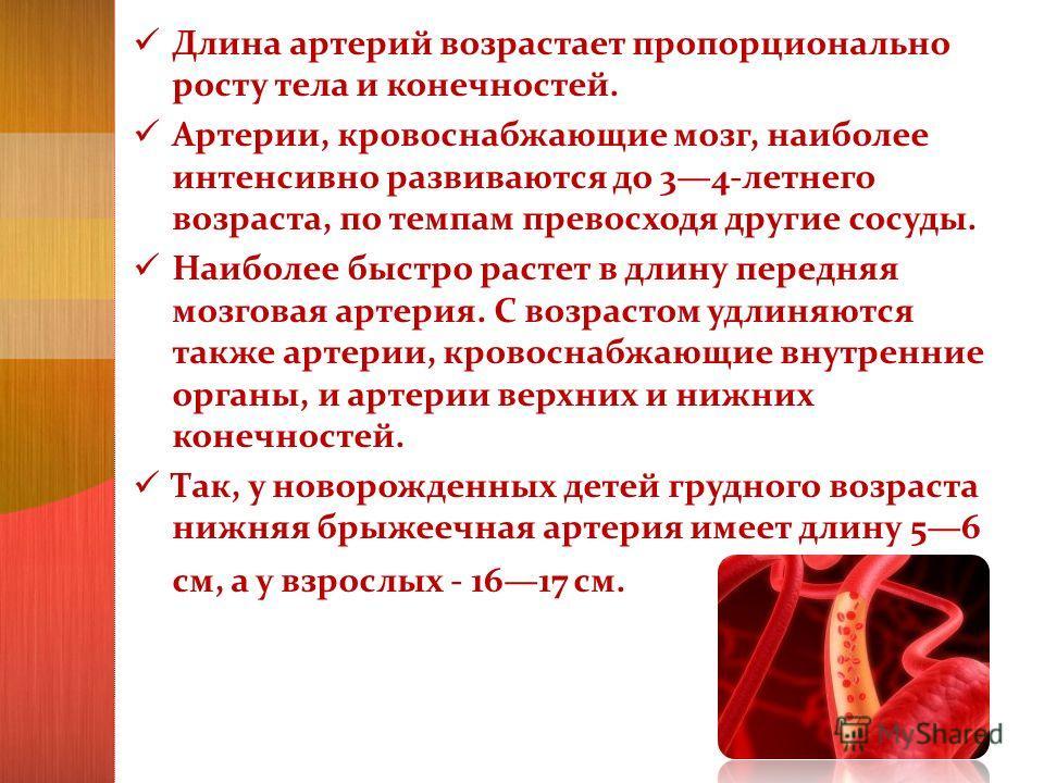 Длина артерий возрастает пропорционально росту тела и конечностей. Артерии, кровоснабжающие мозг, наиболее интенсивно развиваются до 34-летнего возраста, по темпам превосходя другие сосуды. Наиболее быстро растет в длину передняя мозговая артерия. С