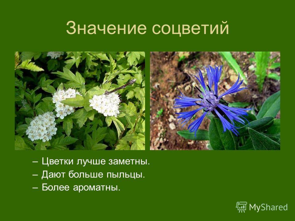 Значение соцветий –Цветки лучше заметны. –Дают больше пыльцы. –Более ароматны.