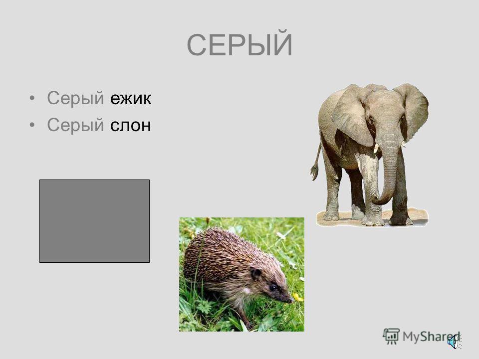 КОРИЧНЕВЫЙ Коричневый лось Коричневый медведь Коричневая шляпка у белого гриба