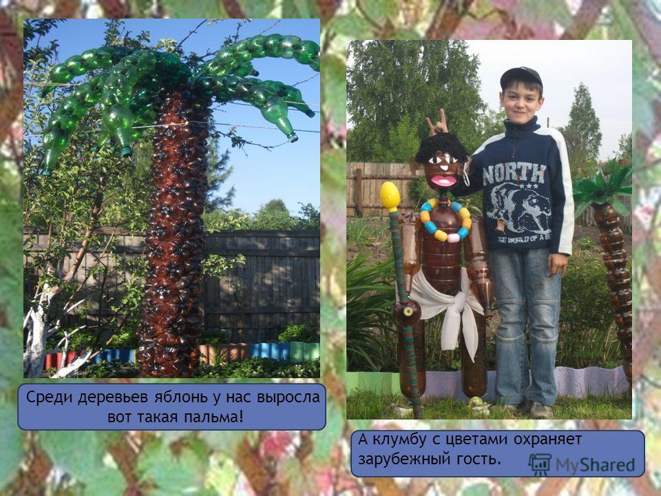 А клумбу с цветами охраняет зарубежный гость. Среди деревьев яблонь у нас выросла вот такая пальма!