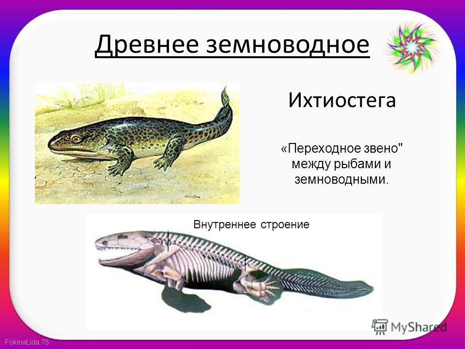FokinaLida.75 Древнее земноводное Ихтиостега Внутреннее строение «Переходное звено между рыбами и земноводными.