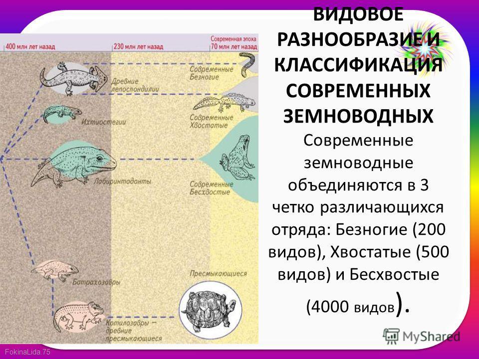 FokinaLida.75 ВИДОВОЕ РАЗНООБРАЗИЕ И КЛАССИФИКАЦИЯ СОВРЕМЕННЫХ ЗЕМНОВОДНЫХ Современные земноводные объединяются в 3 четко различающихся отряда: Безногие (200 видов), Хвостатые (500 видов) и Бесхвостые (4000 видов ).