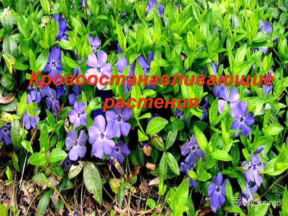 Растения лекарственные растения