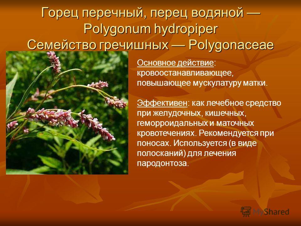 Горец перечный, перец водяной Polygonum hydropiper Семейство гречишных Polygonaceae Основное действие: кровоостанавливающее, повышающее мускулатуру матки. Эффективен: как лечебное средство при желудочных, кишечных, геморроидальных и маточных кровотеч