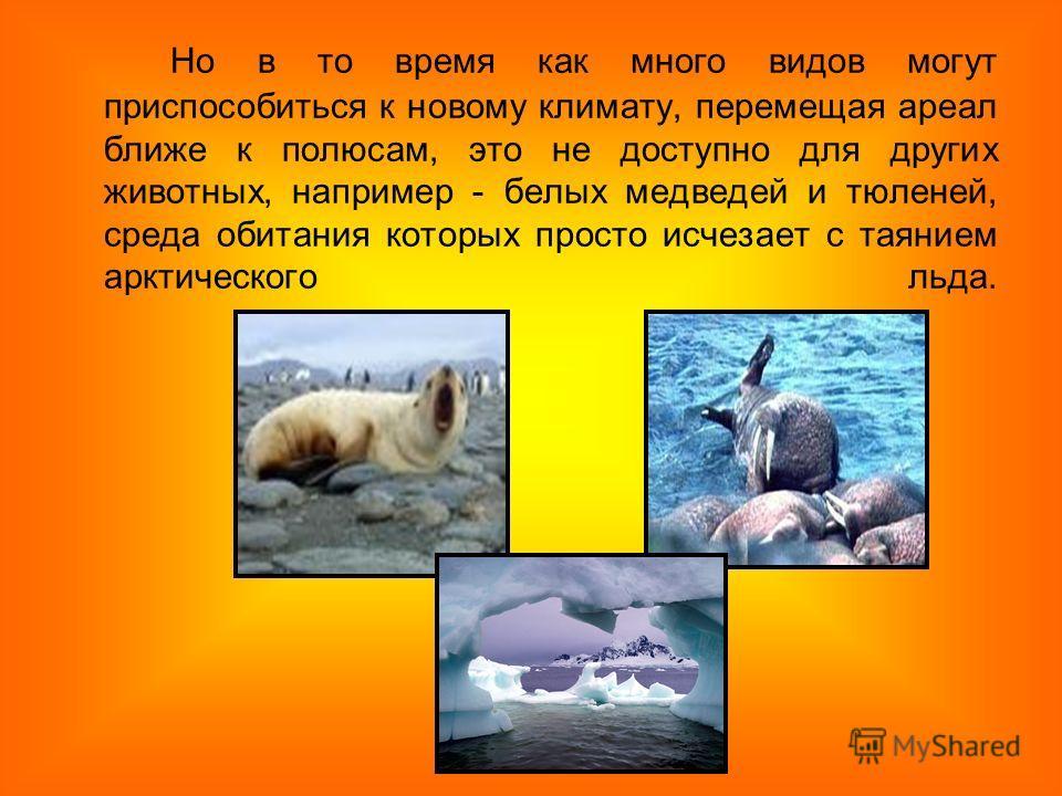 Но в то время как много видов могут приспособиться к новому климату, перемещая ареал ближе к полюсам, это не доступно для других животных, например - белых медведей и тюленей, среда обитания которых просто исчезает с таянием арктического льда.