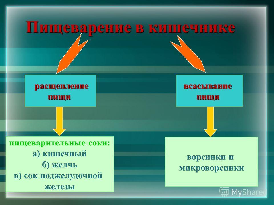 Пищеварение в кишечнике расщепление расщеплениепищивсасываниепищи пищеварительные соки: а) кишечный б) желчь в) сок поджелудочной железы ворсинки и микроворсинки