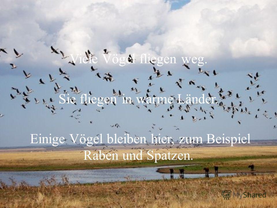 Viele Vögel fliegen weg. Sie fliegen in warme Länder. Einige Vögel bleiben hier, zum Beispiel Raben und Spatzen.