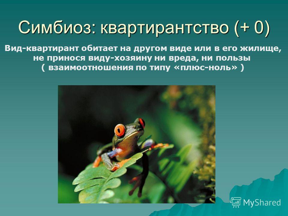 Симбиоз: квартирантство (+ 0) Вид-квартирант обитает на другом виде или в его жилище, не принося виду-хозяину ни вреда, ни пользы ( взаимоотношения по типу «плюс-ноль» )