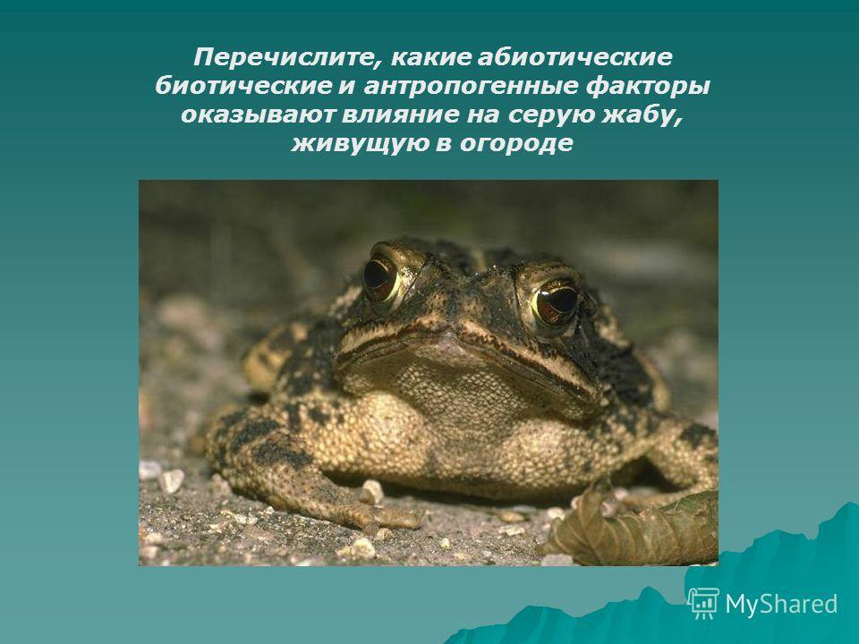 Перечислите, какие абиотические биотические и антропогенные факторы оказывают влияние на серую жабу, живущую в огороде