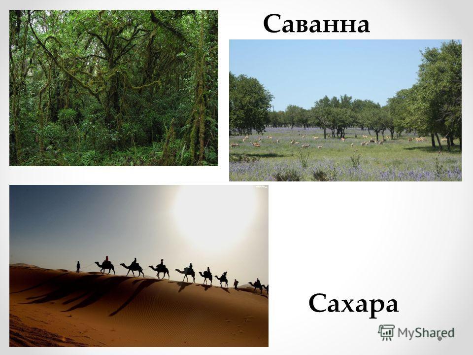 Сахара Саванна
