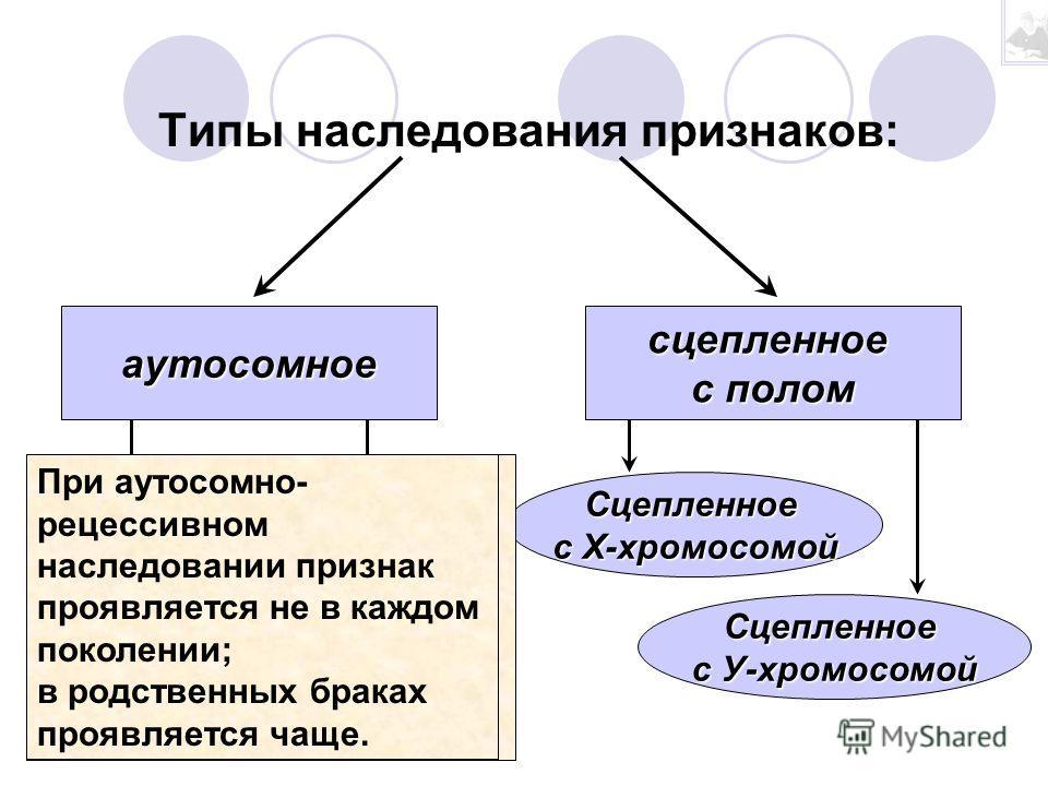 Генеалогический метод - Составление и анализ родословных с целью установления: наследственен ли данный признак или нет; типа наследования признака или заболевания; вероятности наследования признака в ряду поколений.