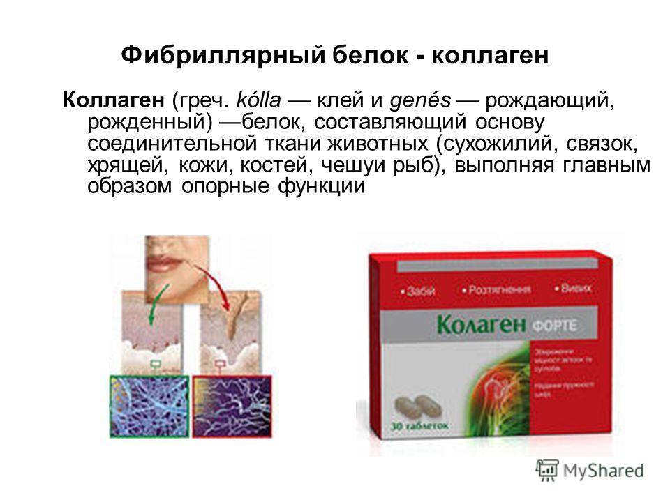Фибриллярный белок - коллаген Коллаген (греч. kólla клей и genés рождающий, рожденный) белок, составляющий основу соединительной ткани животных (сухожилий, связок, хрящей, кожи, костей, чешуи рыб), выполняя главным образом опорные функции
