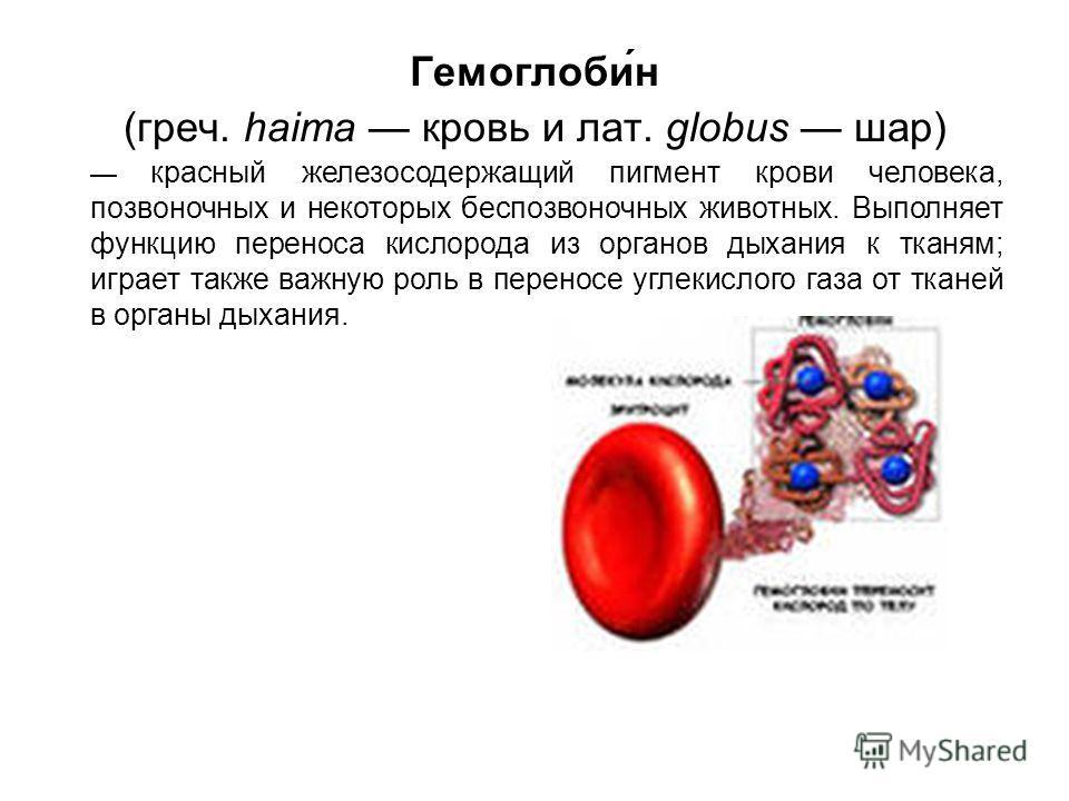 Гемоглоби́н (греч. haima кровь и лат. globus шар) красный железосодержащий пигмент крови человека, позвоночных и некоторых беспозвоночных животных. Выполняет функцию переноса кислорода из органов дыхания к тканям; играет также важную роль в переносе