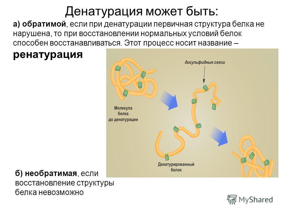 Денатурация может быть: а) обратимой, если при денатурации первичная структура белка не нарушена, то при восстановлении нормальных условий белок способен восстанавливаться. Этот процесс носит название – ренатурация б) необратимая, если восстановление