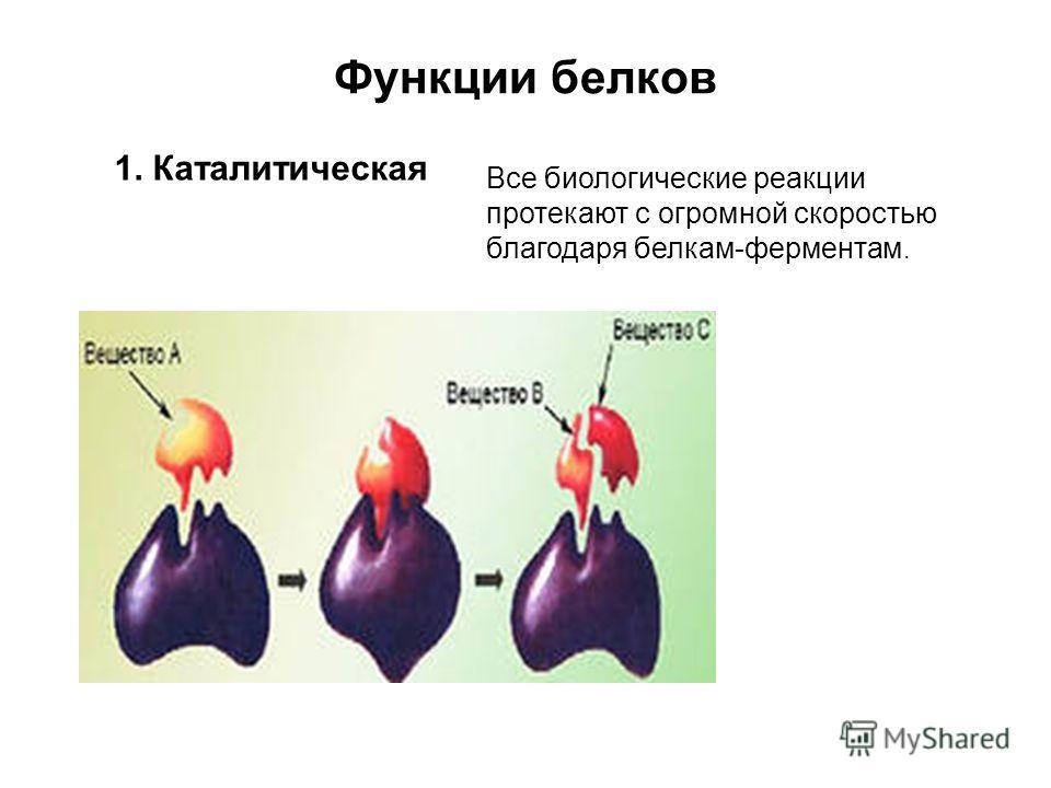 Функции белков 1. Каталитическая Все биологические реакции протекают с огромной скоростью благодаря белкам-ферментам.