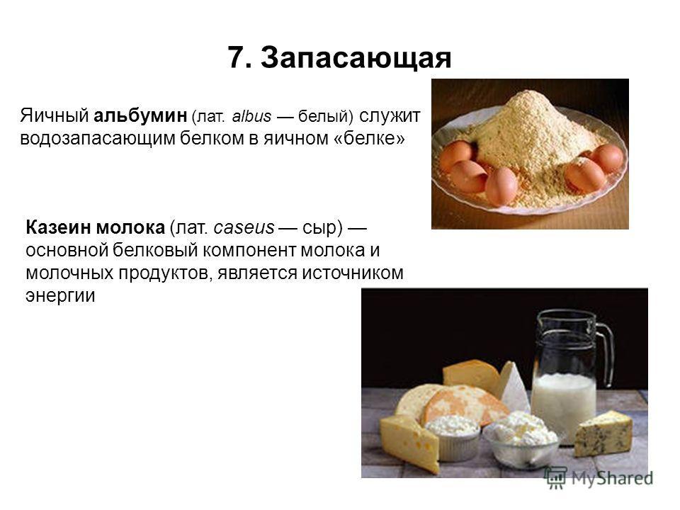 7. Запасающая Яичный альбумин (лат. albus белый) служит водозапасающим белком в яичном «белке» Казеин молока (лат. caseus сыр) основной белковый компонент молока и молочных продуктов, является источником энергии