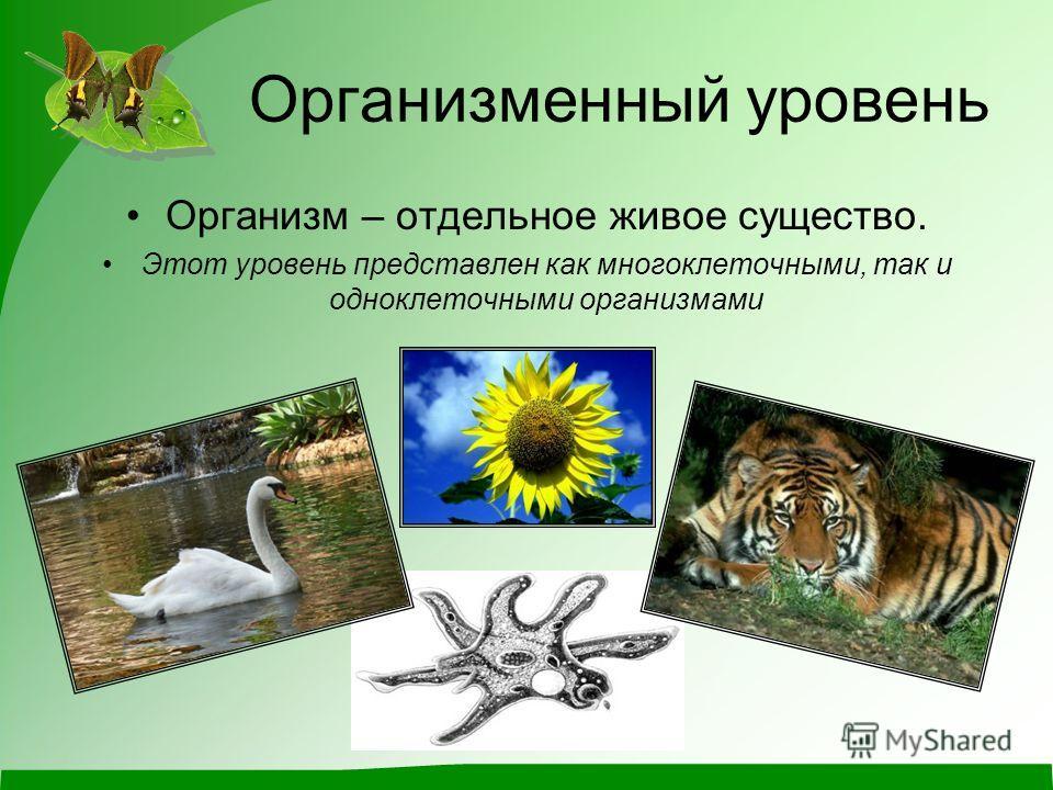 Организменный уровень Организм – отдельное живое существо. Этот уровень представлен как многоклеточными, так и одноклеточными организмами