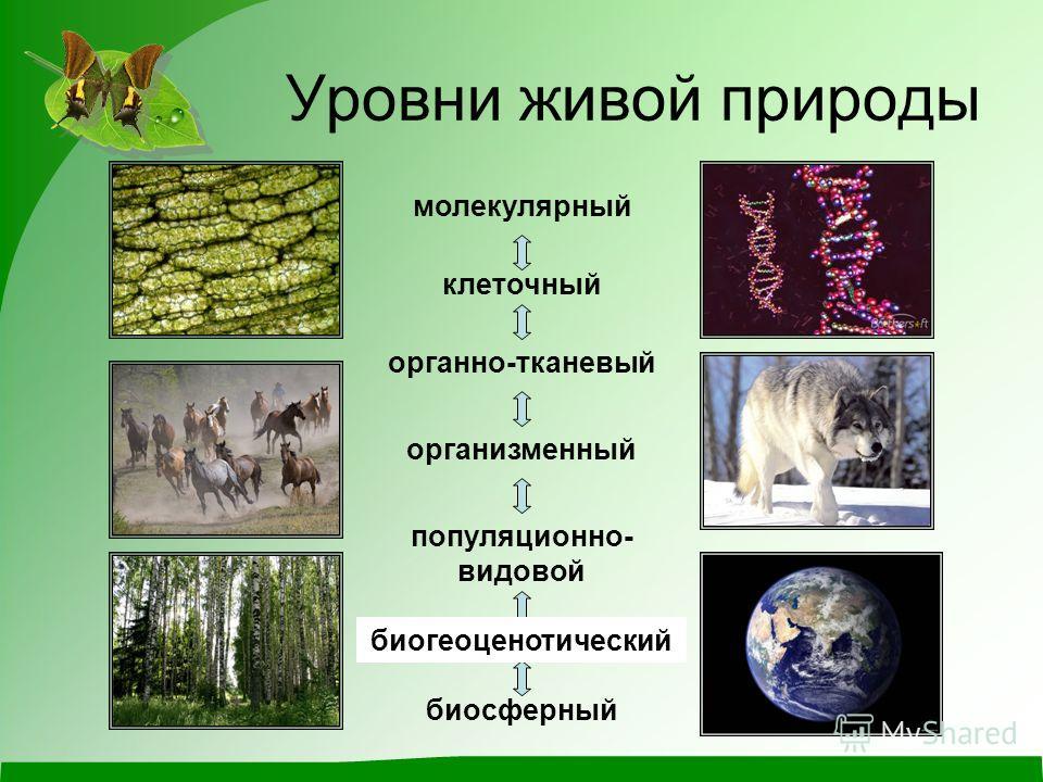 Уровни живой природы органно-тканевый организменный популяционно- видовой экосистемный биосферный биогеоценотический молекулярный клеточный