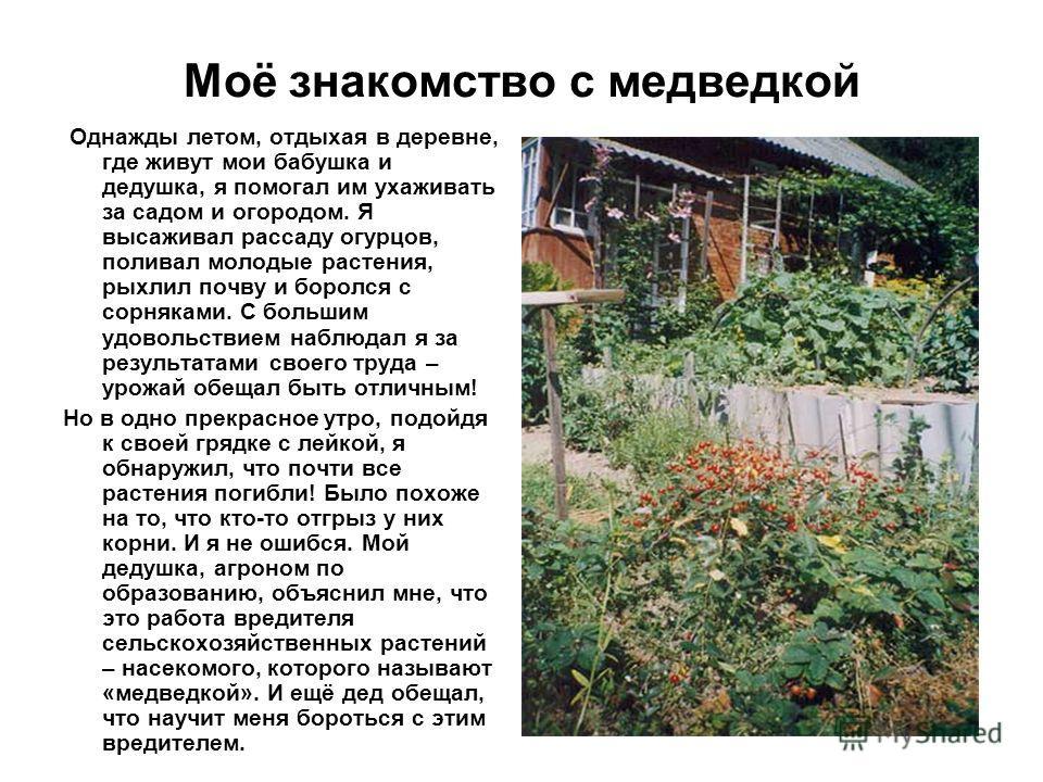 Моё знакомство с медведкой Однажды летом, отдыхая в деревне, где живут мои бабушка и дедушка, я помогал им ухаживать за садом и огородом. Я высаживал рассаду огурцов, поливал молодые растения, рыхлил почву и боролся с сорняками. С большим удовольстви