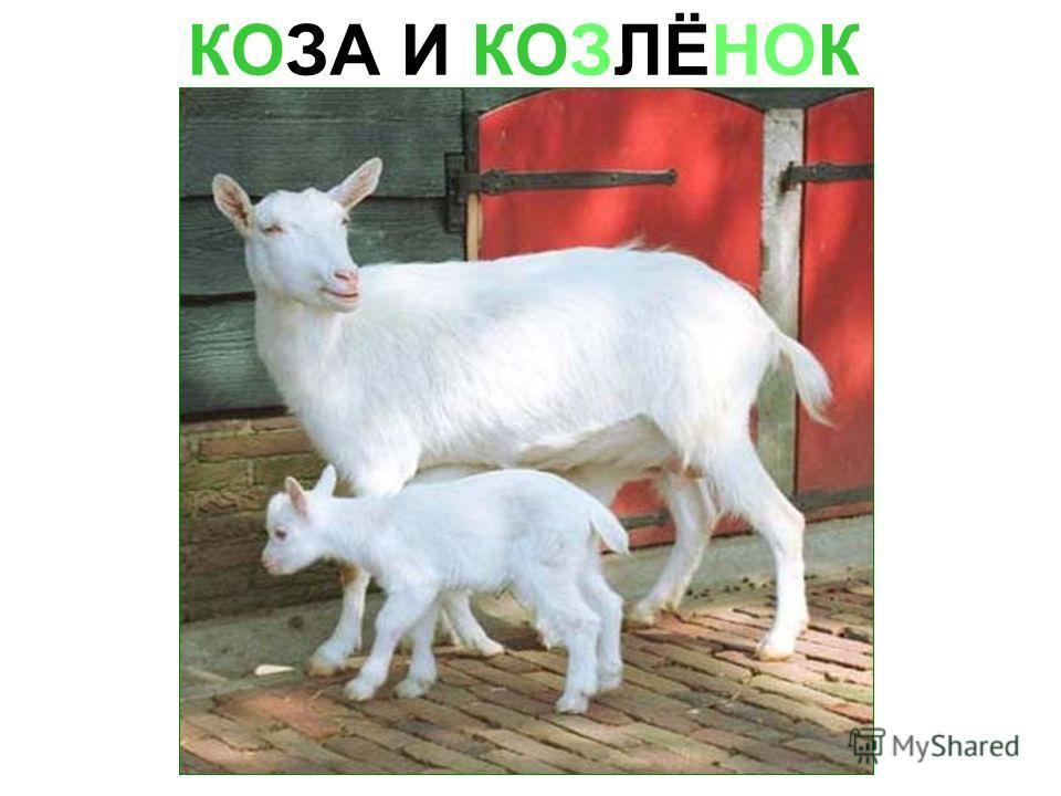 КОЗА И КОЗЛЁНОК